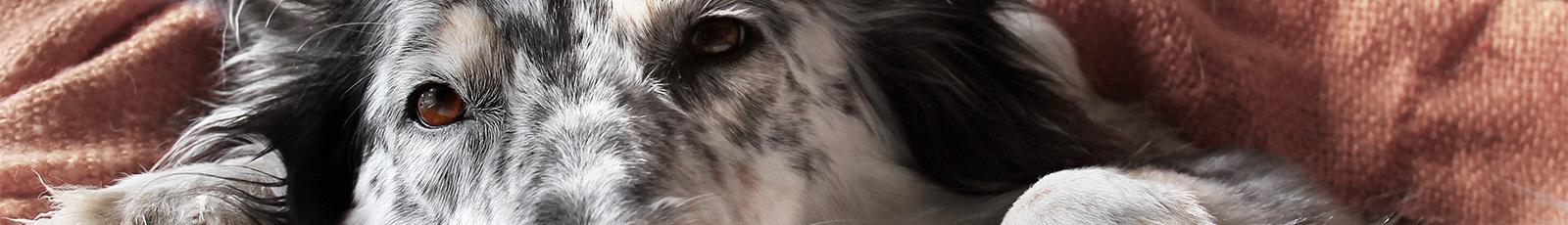 Versicherungen für Haustiere